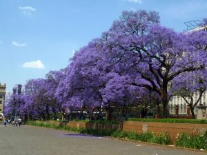 OC Arborists Tree Tips